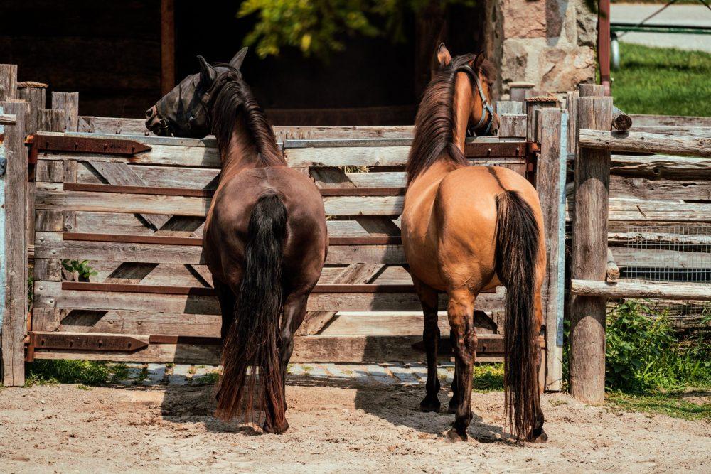 cavallo Nicole De Khors