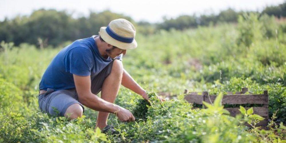 Lancini (Lega) all'UE, azioni forti per l'agricoltura
